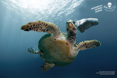 Sea Shepherd: Gloves - Turtle Print Ad by Wings The Agency