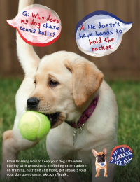 American Kennel Club: If it Barks, it's AKC, 2 Print Ad by Media Cause