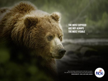 Noe Conservation: Bear Print Ad by Fred & Farid Paris