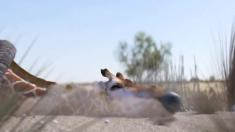 WWF: Elephant vs Giraffe Water Fight Film by CIRKUS, Auckland