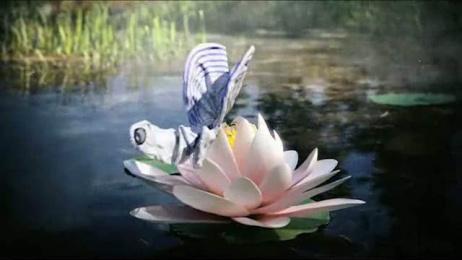 VIC: Butterflies Film by Kitchen Leo Burnett Oslo