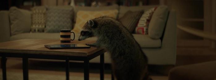 Beeline: Raccoon Film by Contrapunto Moscow, Stink