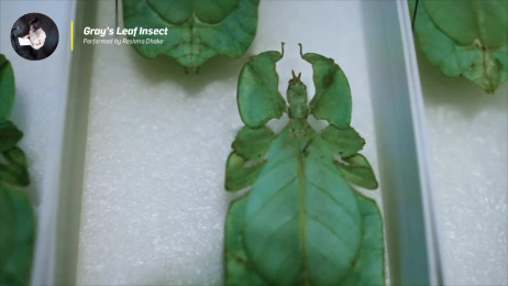 The Field Museum: Ambient Film by Leo Burnett Chicago