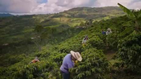Green Mountain Coffee: Sourcing Film by Havas Worldwide New York, Whitelist
