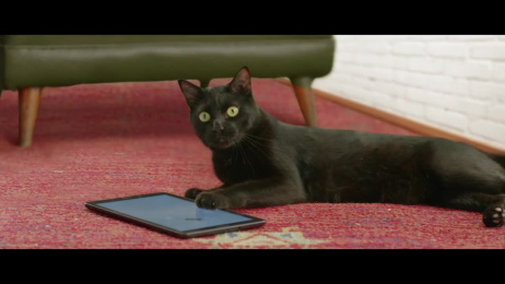 Adote um Gatinho: The Lucky Black Cat  Film by Fat Bastards, Leo Burnett Tailor Made Sao Paulo