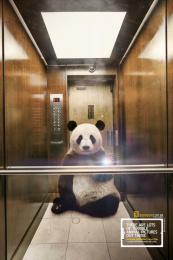 National Geographic: Panda Print Ad by Heads Propaganda
