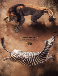 National Geographic: Lion and Zebra Print Ad by Rocket Yard
