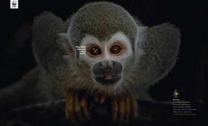 WWF: Monkey Print Ad by Humano Bolivia