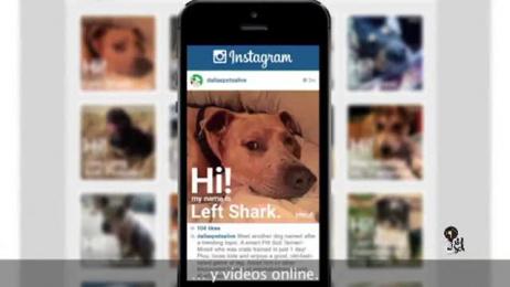 Dallas Pets Alive/ DPA: Adoptable Trends [video] [spanish subtitles] Case study by Dieste Harmel & Partners, Letca Films