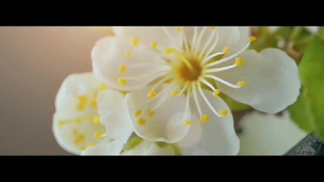NaRaYa: NaRaYa 30th Anniversary Film by Dentsu One Bangkok, Phenomena