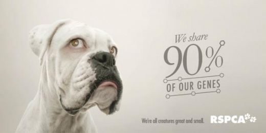 RSPCA QLD: We're all creatures great & small - Dog [alternative version] Print Ad by The Engine Group