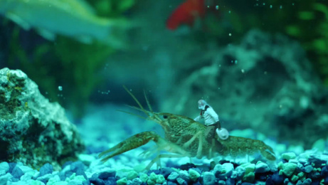 Jolly Rancher: Fish tank Film by Dummy Films, Erich & Kallman San Francisco