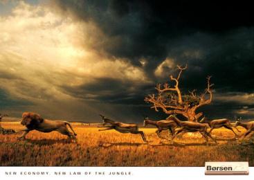 Borsen: LION CHASED Print Ad by Umwelt