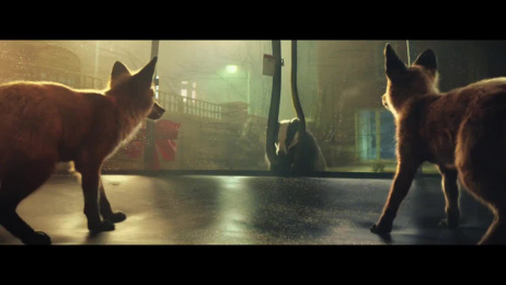 John Lewis: Buster The Boxer Film by adam&eveDDB London, Blink Productions, LELAND MUSIC, MPC