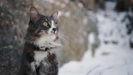 Sheba: The Cats That Rule The World: Adventure Cat, Denali Film by AMV BBDO London, Flare, Mediacom London