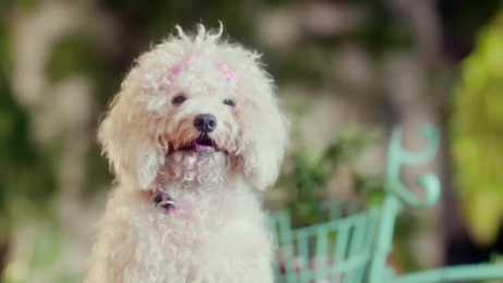 Reliance General Insurance: Dogs in Love Film by Absolute Films, Ogilvy & Mather Mumbai