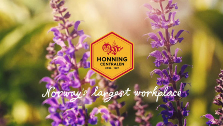 Honningcentralen (The Honey Central): Norway's largest workplace: Buzzing Around Film by Atyp Oslo