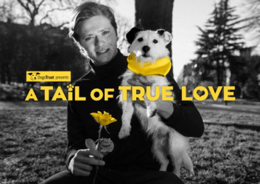 Dogs Trust: The Big Scoop Digital Advert by TMW