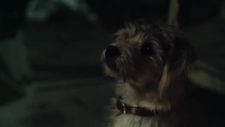 RSPCA: It Takes All Of Us To Care [30 sec] Film by Arthur London