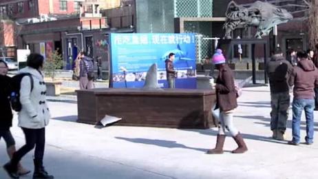 Ifaw/international Fund Of Animal Welfare: COFFIN Outdoor Advert by Y&R Shanghai