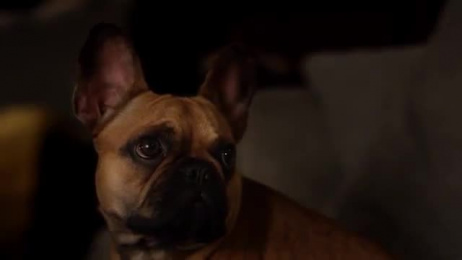 RAC Pet Insurance: Breakup Film by JWT Perth, Open Spaces Productions