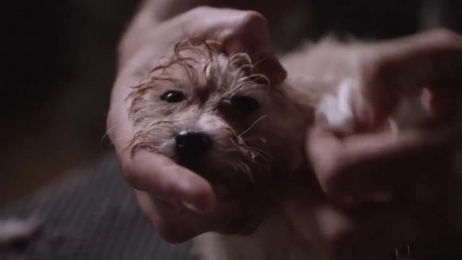 RSPCA: The Disguise Film by Photoplay Films, Saatchi & Saatchi Sydney