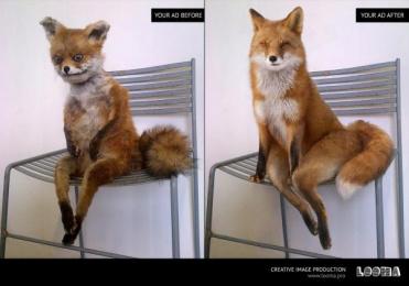 Looma: Fox Print Ad by Looma